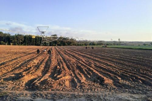 terreno esposto a sud che rispetta i requisiti necessari per l'installazione di pannelli solari su terreno agricolo